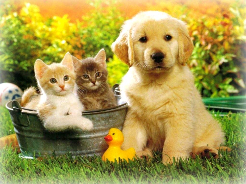 I parassiti, nemici dei cani e dei gatti in primavera
