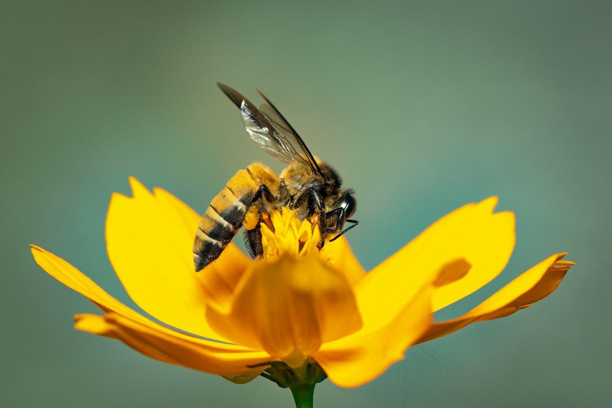 Pericolo di punture di api, vespe e calabroni: quali sono i possibili rimedi