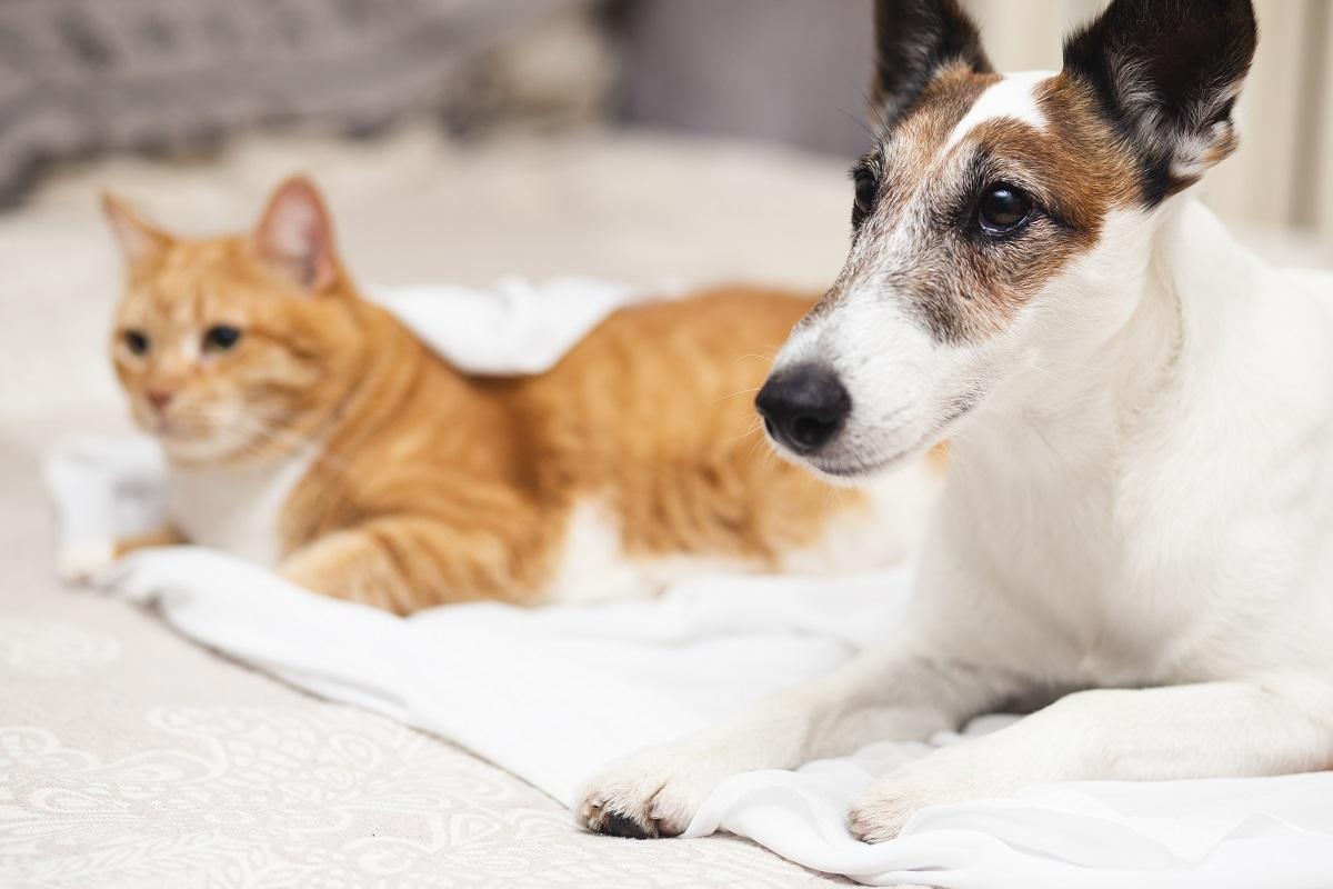 Sos parassiti: i prodotti antiparassitari per proteggere gli animali domestici